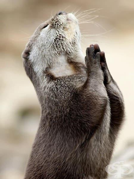 Моля те, отговори на молитвите ми!