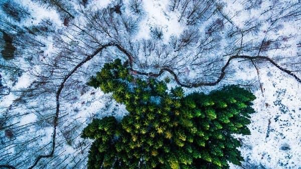 1-ва награда – категория Природа: Гората Калбирис, Дания