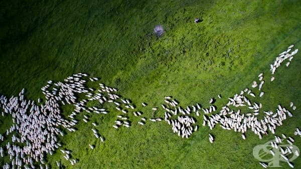 2-ра награда – категория Природа: стадо овце