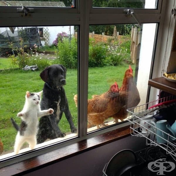 Много ни е интересно какво ли гледат?