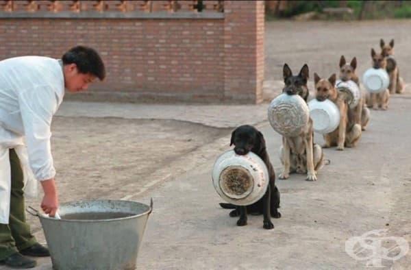 Полицейски кучета в Китай се редят за обяд.