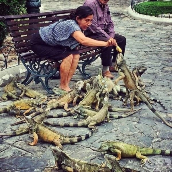 """Да нахраниш """"птиците"""" в Еквадор."""