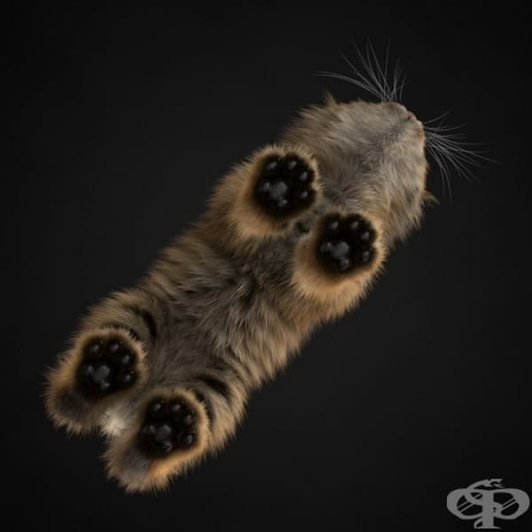 Коте, гледано отдолу.