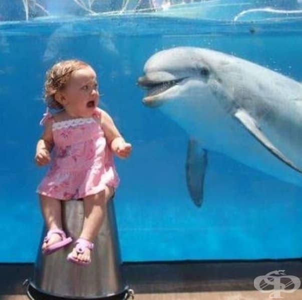 Сега знаем, че делфините не винаги са приятелски настроени ...