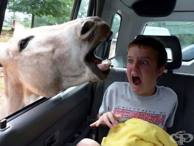 ... и коне!