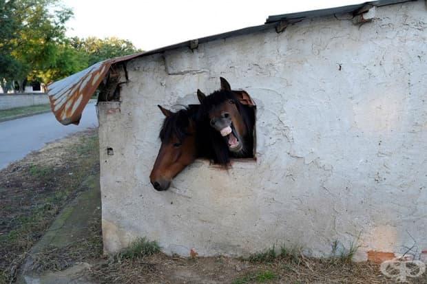 Коне в конюшня близо до село Понтойраклиа, Гърция.