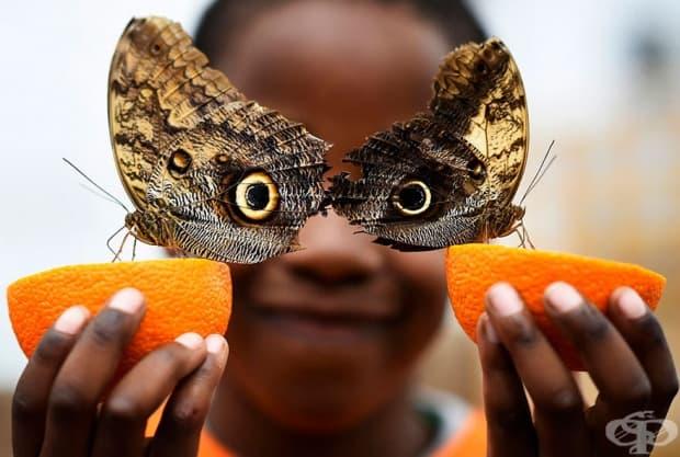 Бьорн на 5 години, се усмихва, докато позира с пеперуда бухал по време на изложба на пеперуди в Музея по естествени науки, Лондон, Великобритания.