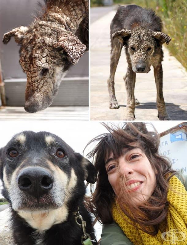 Малтретирано куче, което се страхуваше от хора, днес се моли да го почешат по коремчето.