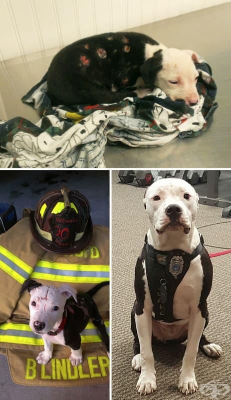 Куче, спасено от пожар, става пожарникар.