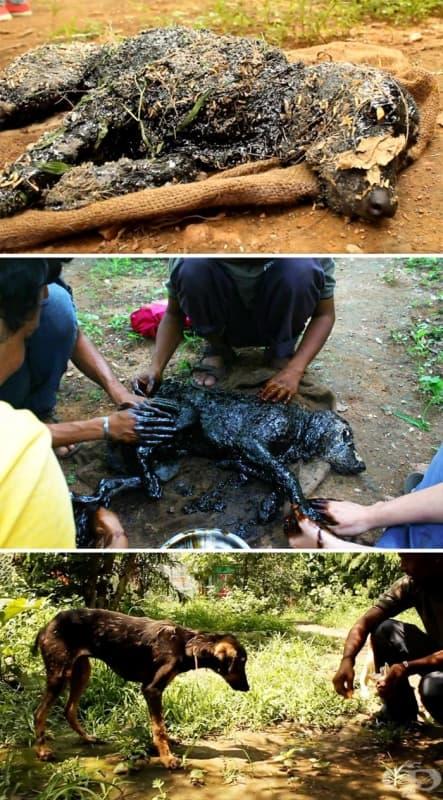Куче било оставено да умре, след като паднало в горещ катран, но един човек с добро сърце го спасява и 3 часа го търка, за да махне катрана.