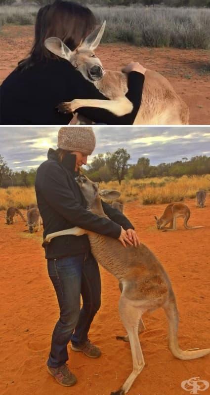Спасено кенгуро всеки ден прегръща в знак на благодарност спасителите си.
