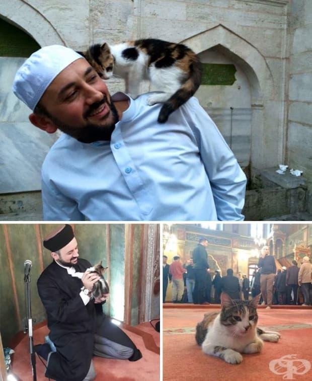Имам отваря вратите на джамията си за бездомните котки.