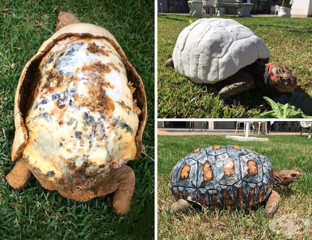 Ранена костенурка получава първата в света 3D принтирана коруба.