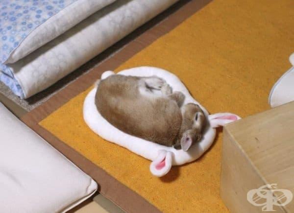 Спящото зайче.