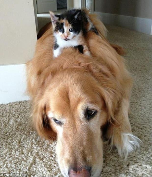 Кучета май не е доволно – освен легло подозираме, че е и бавачка.