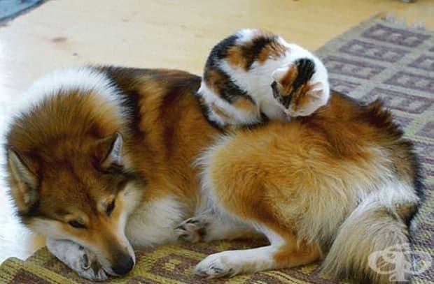 Като близнаци! Как да не дадеш на тази котка да ти спи отгоре, като те допълва толкова добре.