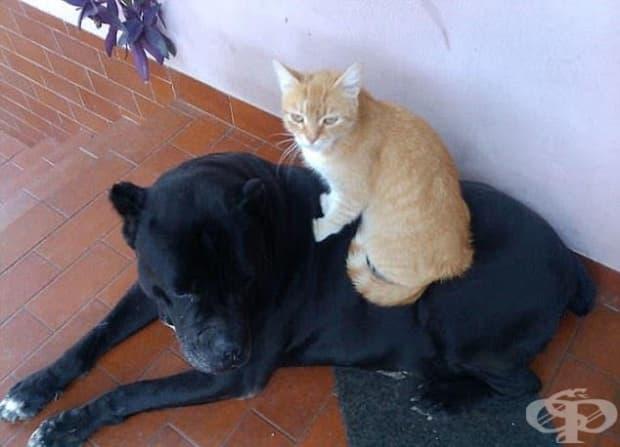 Ако съдим по начумерените физиономии на кучето и котката, току що някой ги е събудил…