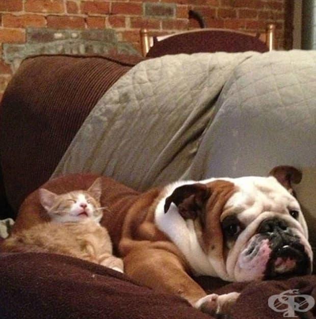 За кучето не сме убедени, но котката е уцелила джакпота.