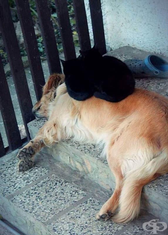 Неслучайно някой е казал, че черните котки са напаст…