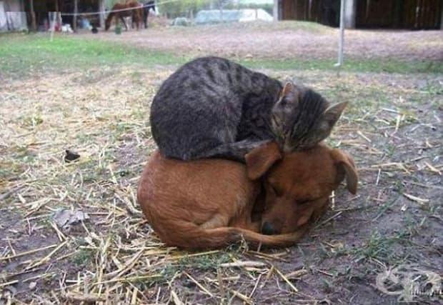 Във фермата всички животни си помагат, особено когато застудее.