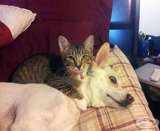 Горкото момче – кучето изглежда ужасено, а на котката не й пука.