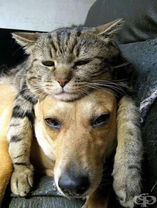 Тази котка определено обича своето куче и знае как да му го покаже.