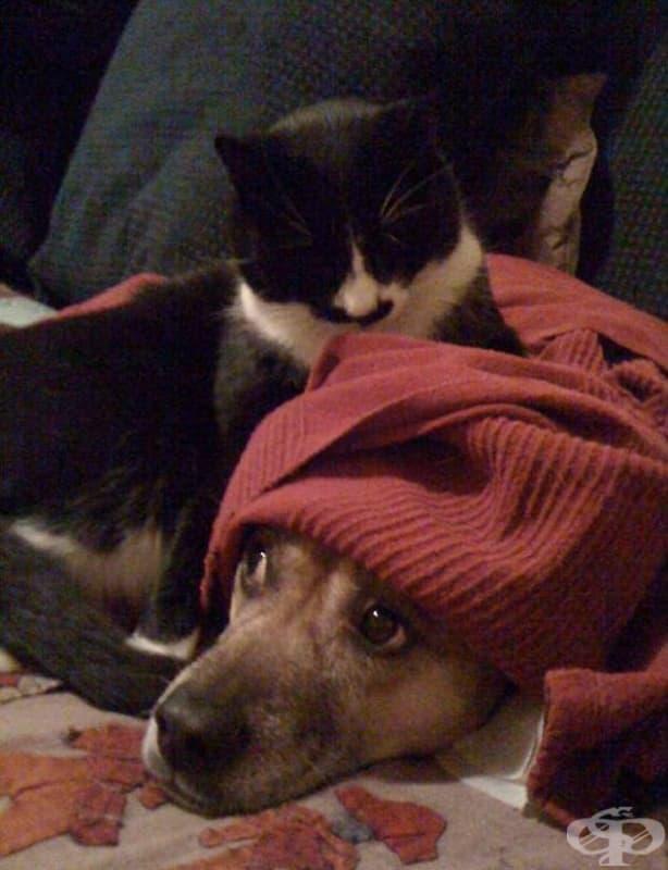 Това куче май се крие под завивката неслучайно…