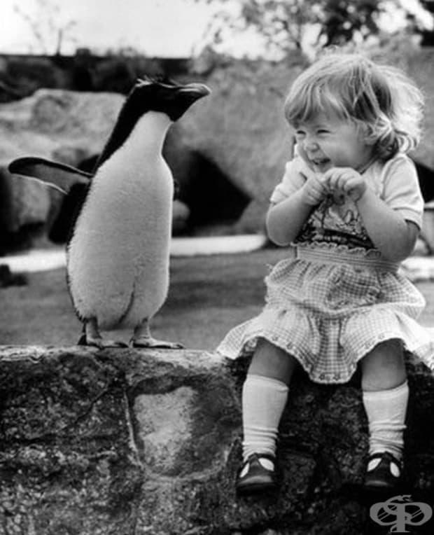 Малко дете среща пингвин за първи път