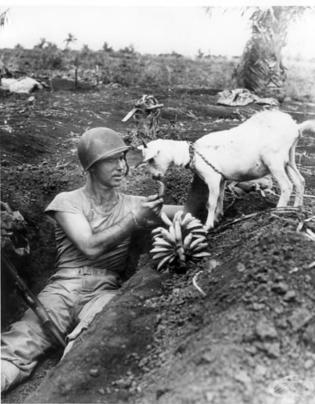 Войник споделя бананите си с козичка. Битката за Сайпан, 1944 г.