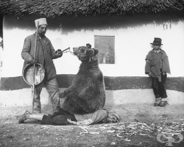Лекуване на болки в гърба с мечка, Румъния, 1946 г.