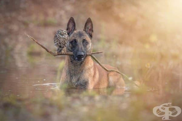 Или кучето е много мило, или бухалът е много смел!