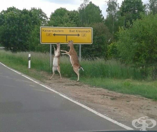 Ей, човеко, ще ни закараш ли до града?