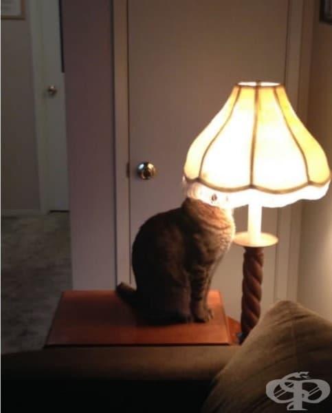 Понякога се чудите дали котката ви не е дефектна.