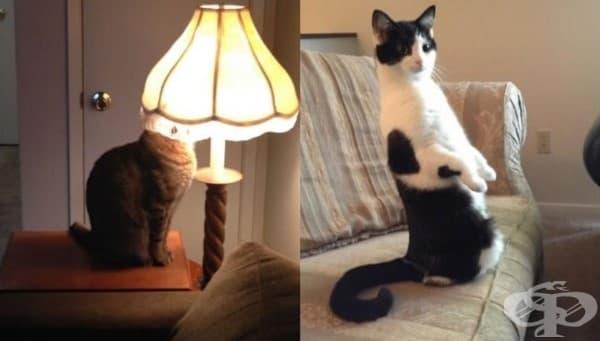 19 снимки, които доказват, че котките са изключително странни създания