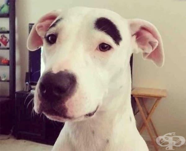 Едно загрижено куче