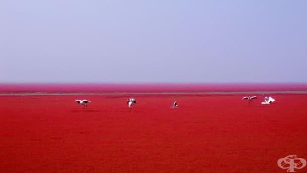 Червен плаж в Панжин, Китай