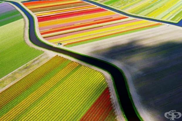 Полета с лалета близо до Воорхаут, Холандия