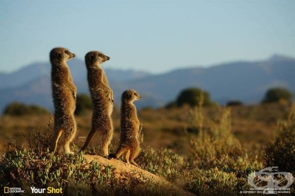 """Така, къде оставихме колата?"", Мадагаскар."