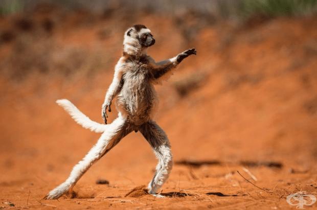 Танц в Мадагаскар.