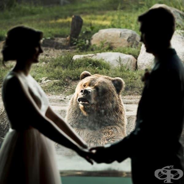 Изненада по време на фотосесия .... мечка.