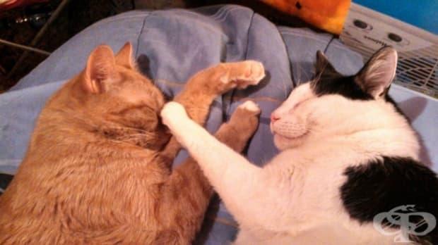 Няма нищо по-забавно от това да събудиш брат си.
