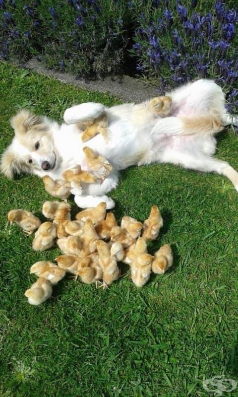 Тези пиленца са си намерили нов най-добър приятел.
