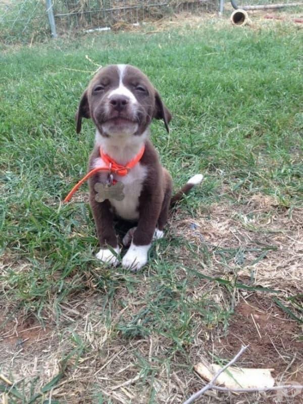 Това куче наистина ви обича. Всички ви!