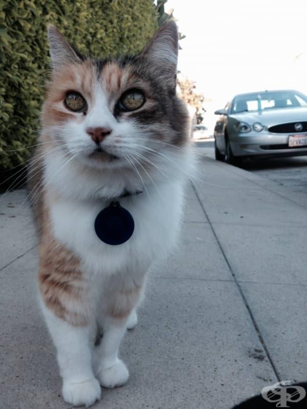 Тази котка би направила живота на всеки един от нас малко по-поносим, защото… е, просто я вижте!