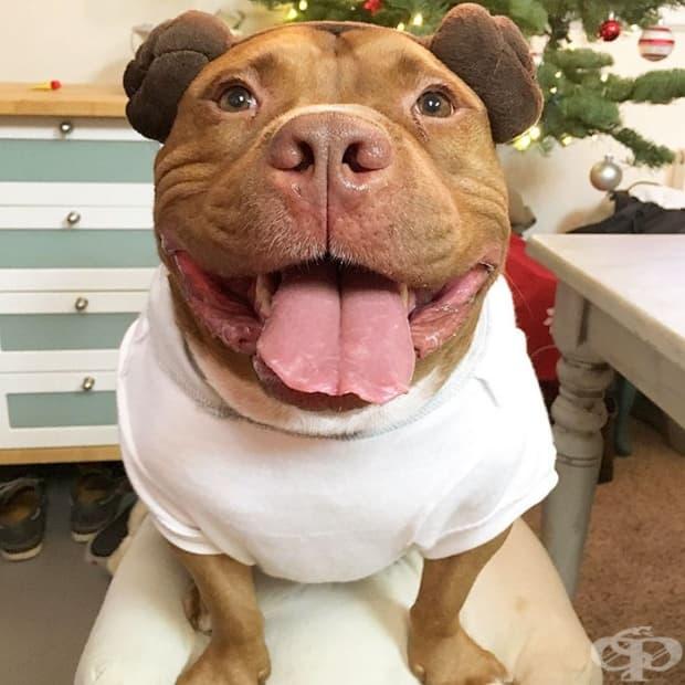 Запознайте се с Мийти, кучето, което не спира да се усмихва, откакто е осиновено от приют
