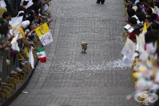 Кучето, което се оказа в центъра