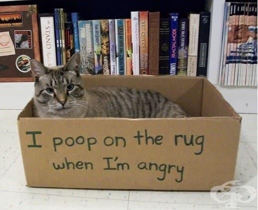 Акам на килима, когато съм ядосан