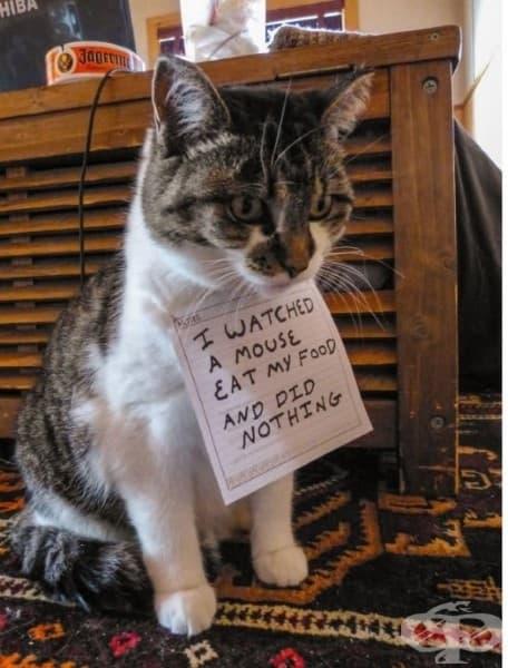 Гледах как една мишка ми яде храната и не направих нищо