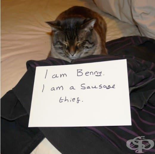 Аз съм Бени. Крада наденички