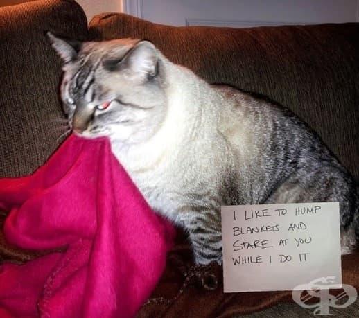 Обичам да дъвча одеяла и да те зяпам докато го правя